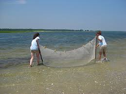 Seine netting in Saint Augustine FL