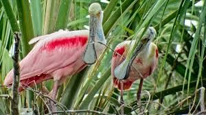 Native Florida birds on eco-tours in St. Augustine